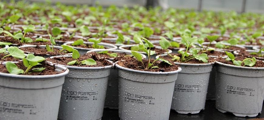 Mustesuihkutulostuksella kasvipassimerkintä suoraan taimiruukkuun